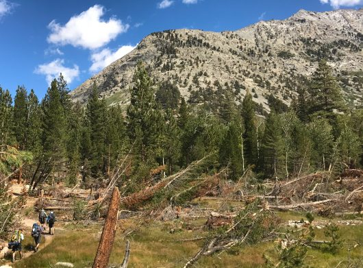 Hiking along the JMT