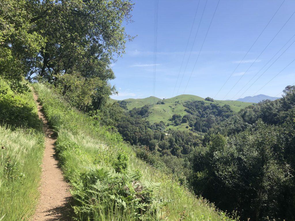 Lush green trail in huckleberry botanic regional preserve